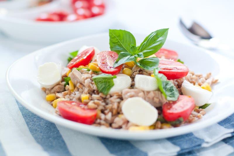 farro冷的沙拉用无盐干酪、蕃茄和金枪鱼意大利 免版税库存图片