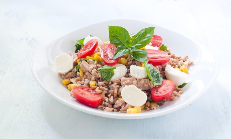 farro冷的沙拉用无盐干酪、蕃茄和金枪鱼 免版税库存图片