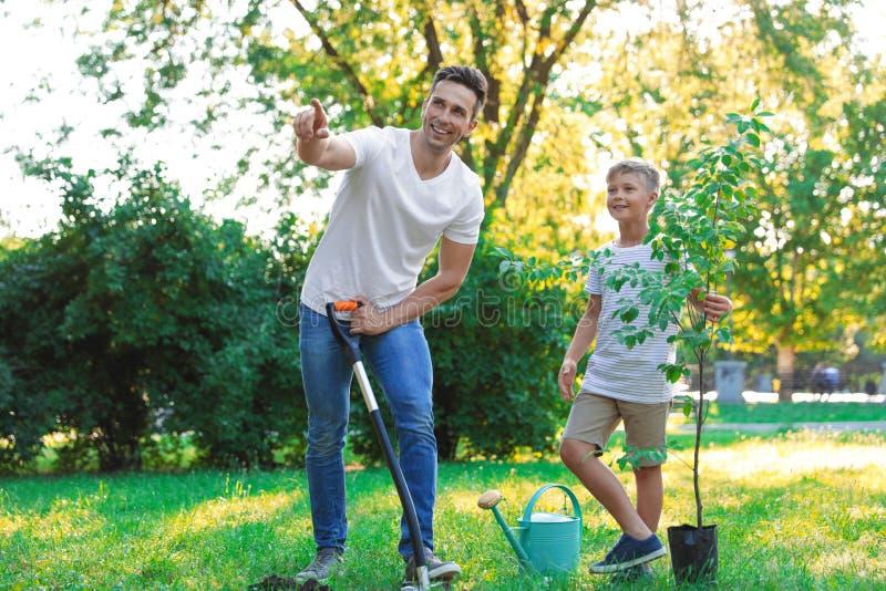 Farsa och son som planterar trädet på solig dag arkivbilder