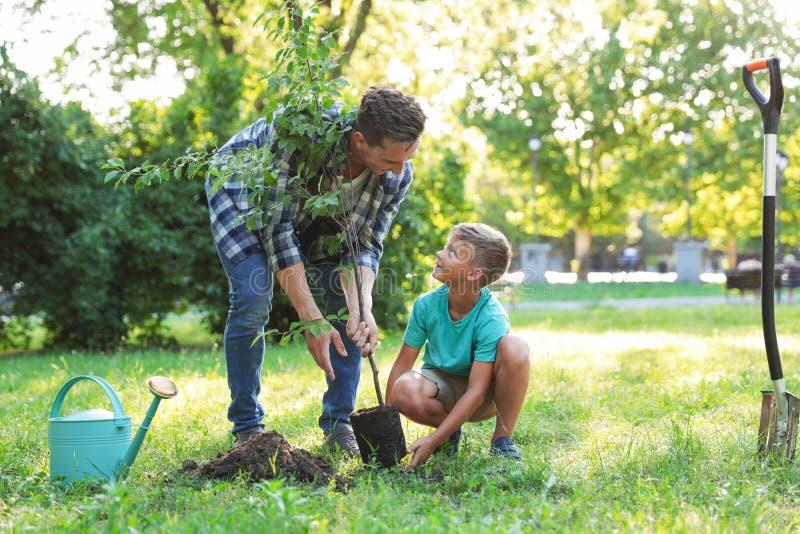 Farsan och sonen som planterar trädet parkerar in, på soligt arkivbild