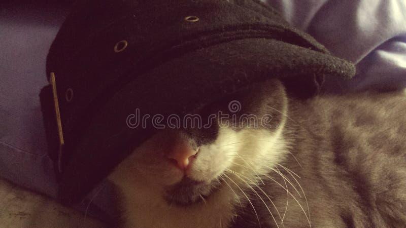 Fartfylld katt för gangster i hatt arkivbilder