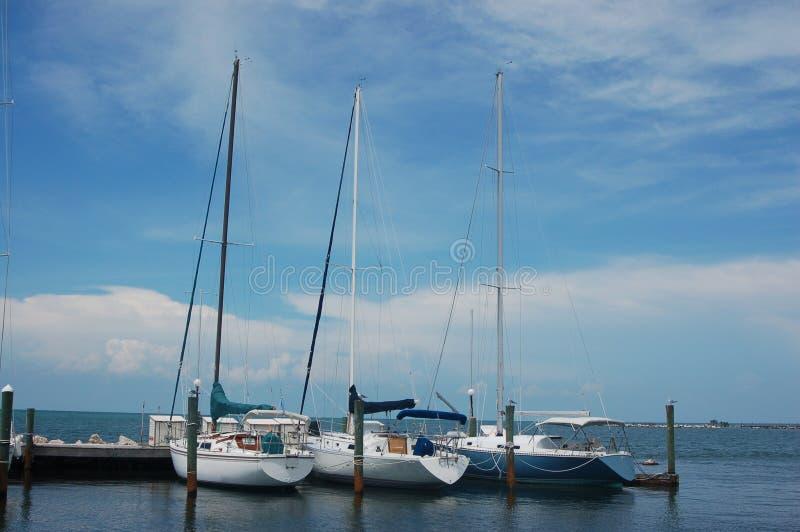 Download Fartyg seglar tre arkivfoto. Bild av florida, grunt, kustlinje - 238670