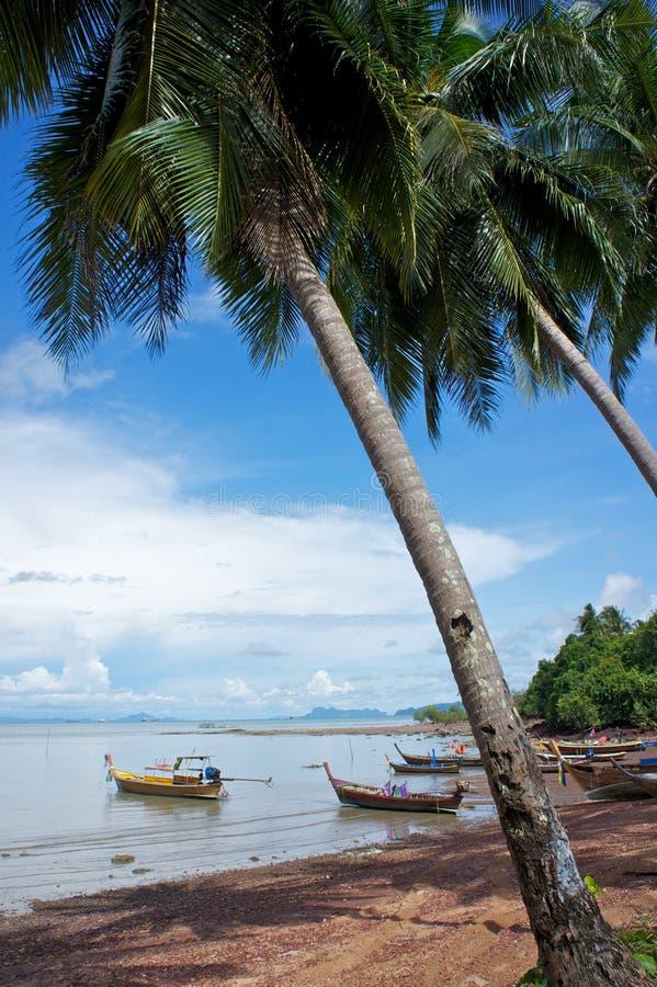 fartyg som under fiskar palmtrees arkivfoto