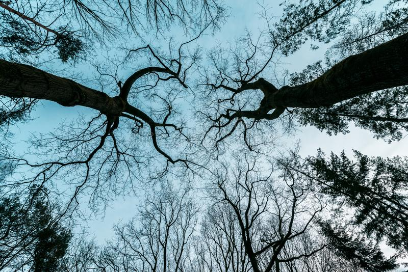 Fasa som är mystisk, thrillerträd royaltyfri bild