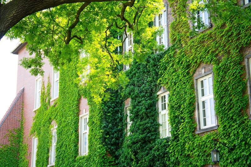 Fasada piękny stary budynek przerastający z bujny zieleni kędzierzawymi roślinami obrazy stock