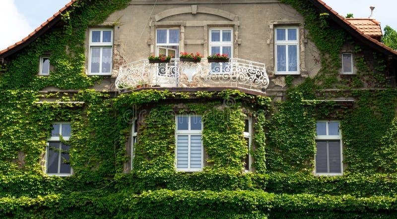 Fasaden av huset med balkongen täckas med den gröna murgrönan arkivbilder