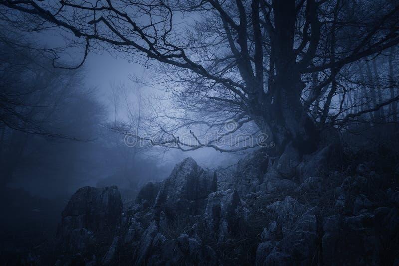 Fasalandskap av den mörka skogen med det läskiga trädet royaltyfria foton