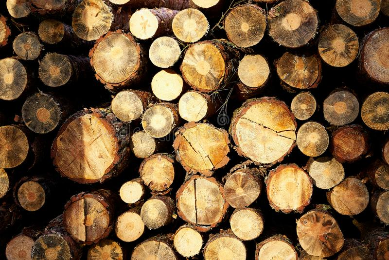 Fasci da un albero impilato su un grande mucchio immagine stock