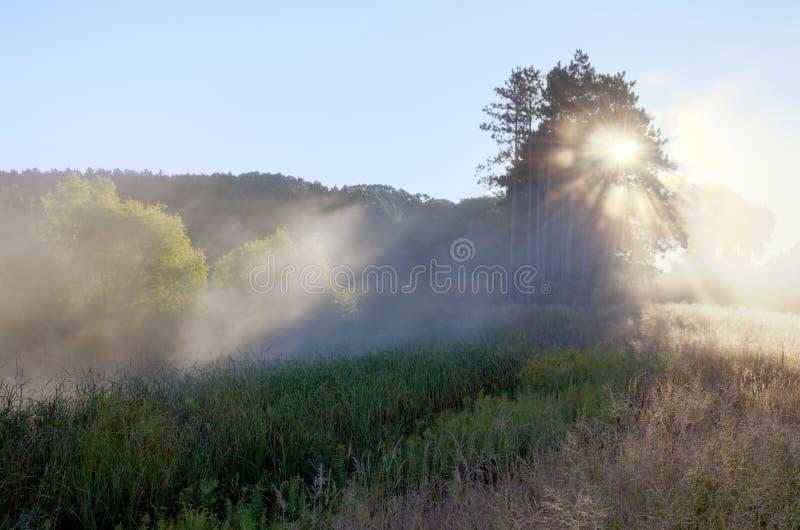 Fasci di Sun attraverso la nebbia immagine stock