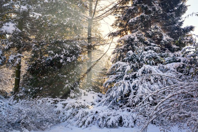 Fasci di Sun in un parco nevoso fotografia stock libera da diritti