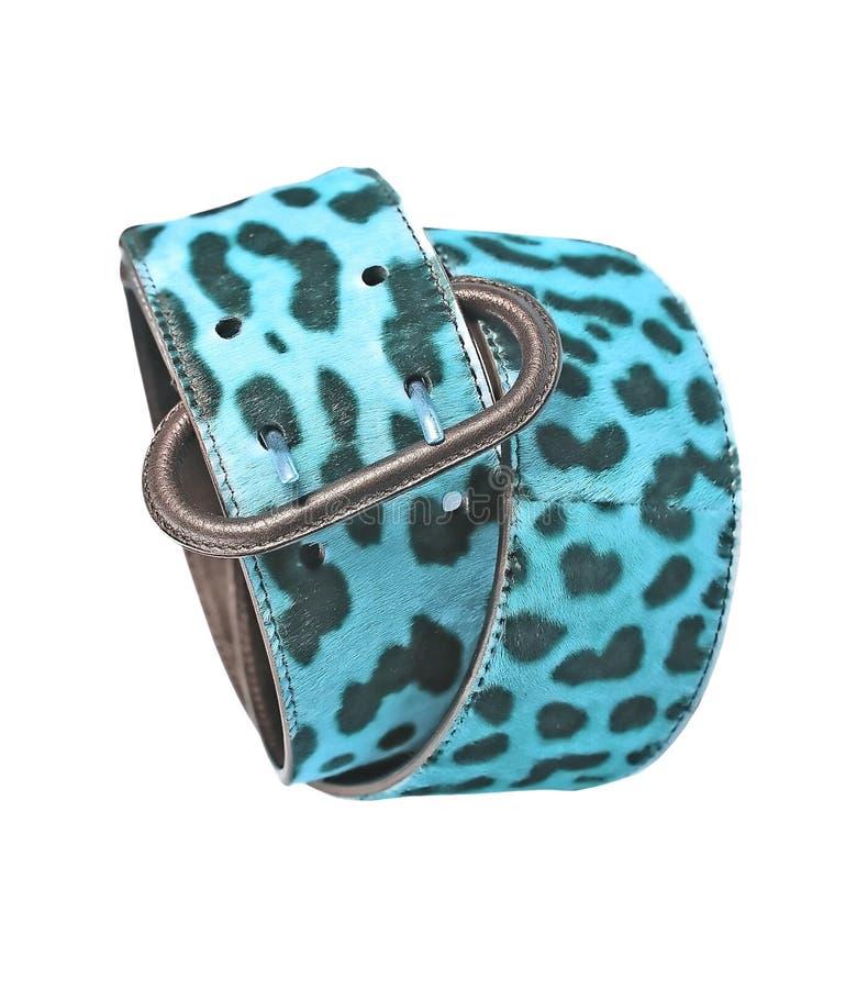 Fascia di cuoio del leopardo blu immagine stock libera da diritti