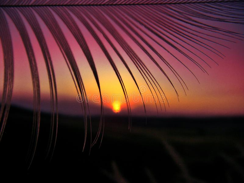 Fascinating shot of a silhouette of exotic plant leaves and the colorful sunset sky behind. A fascinating shot of a silhouette of exotic plant leaves and the royalty free stock image