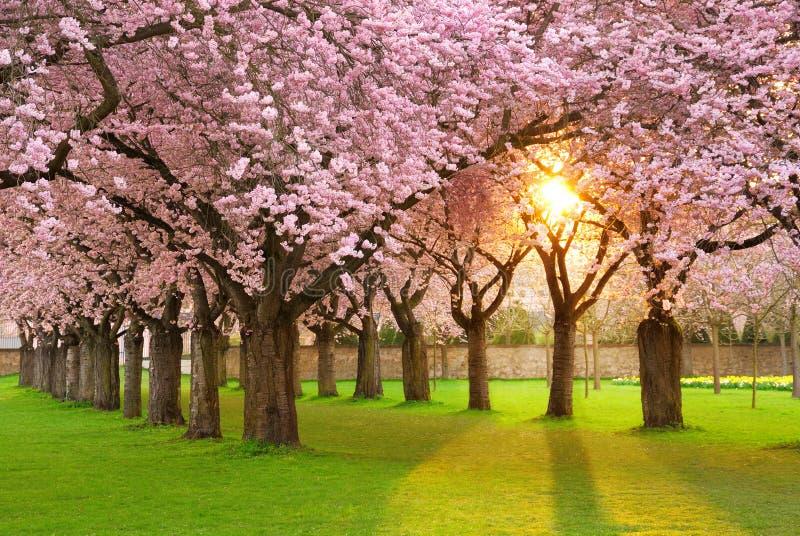 Fascinating springtime scenery stock image