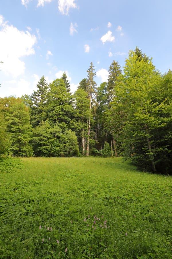 Fascination, types de grand-format de prés verts, bords et les bois alpins les collines dans l'été image stock