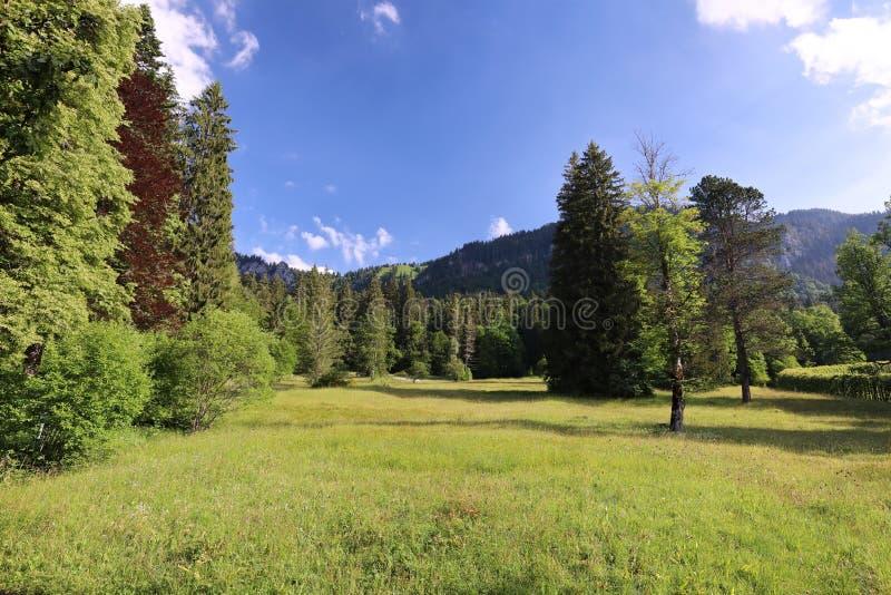 Fascination, types de grand-format de prés verts, bords et les bois alpins les collines dans l'été photos libres de droits