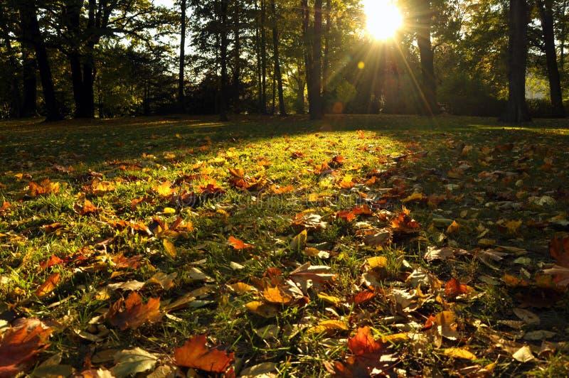 Fascinera skönhet av hösten parkera royaltyfria foton