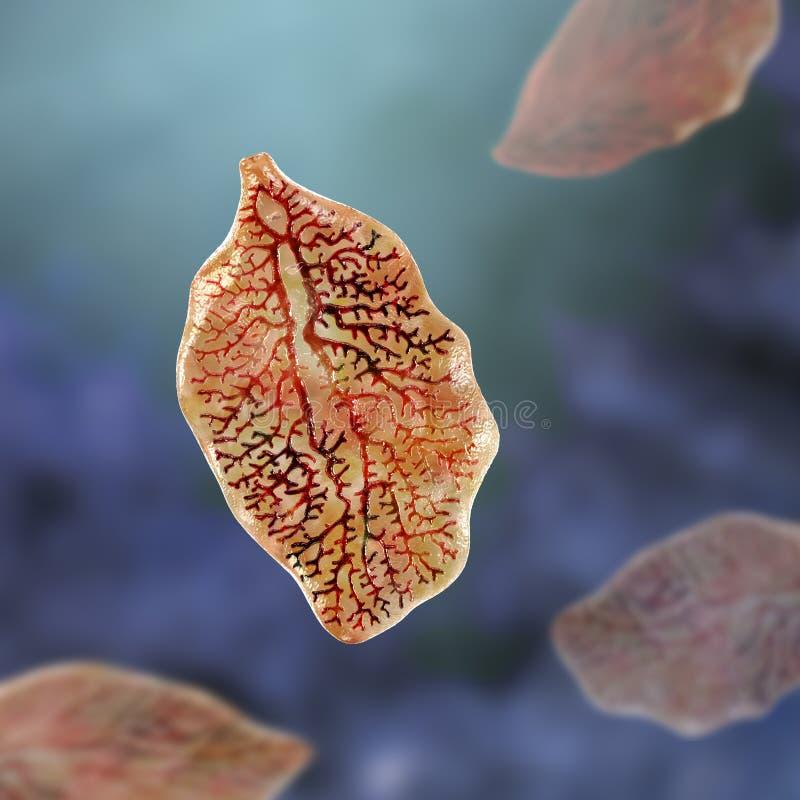Free Fasciola Hepatica, Or Liver Fluke Stock Images - 182370794
