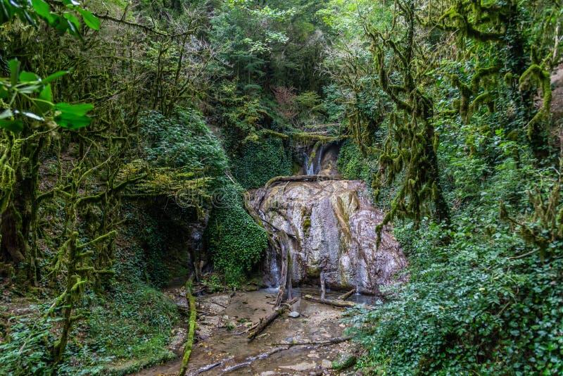 Fascynująca podróż przez doliny siklawy w boxwood lesie, Krasnodar region, Rosja fotografia stock