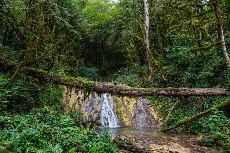 Fascynująca podróż przez doliny siklawy w boxwood lesie, Krasnodar region, Rosja zdjęcia royalty free