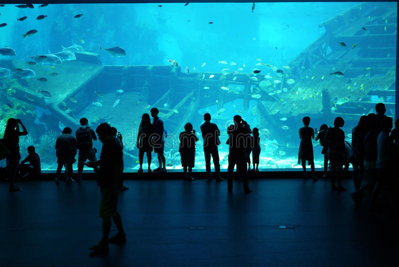 Fase da visão do aquário do mar de Singapura - 21 de fevereiro de 20 foto de stock royalty free