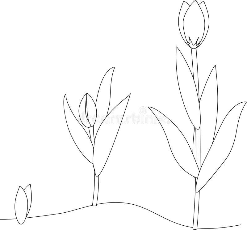 Fase di crescita del tulipano coloring royalty illustrazione gratis