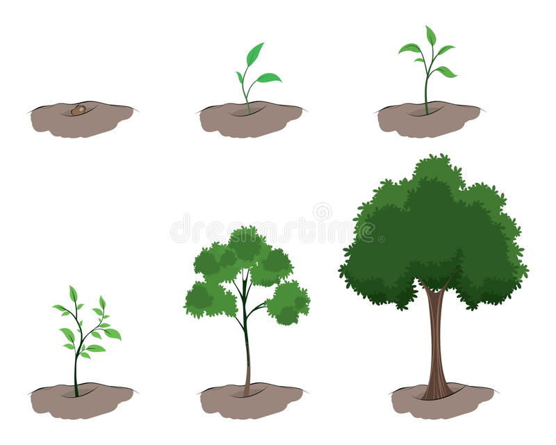 Fase di crescita dell'albero fotografia stock