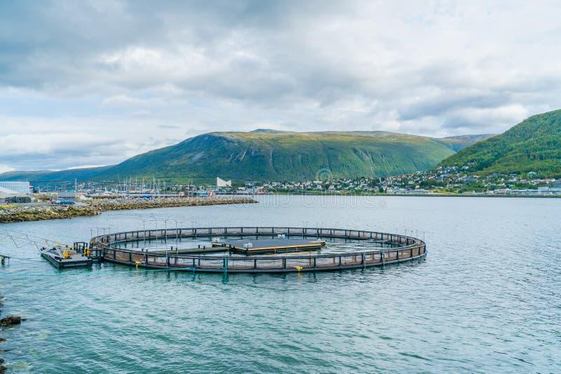 Fase no oceano, Tromso do número 4 de Halogaland Teatre, Noruega imagens de stock royalty free