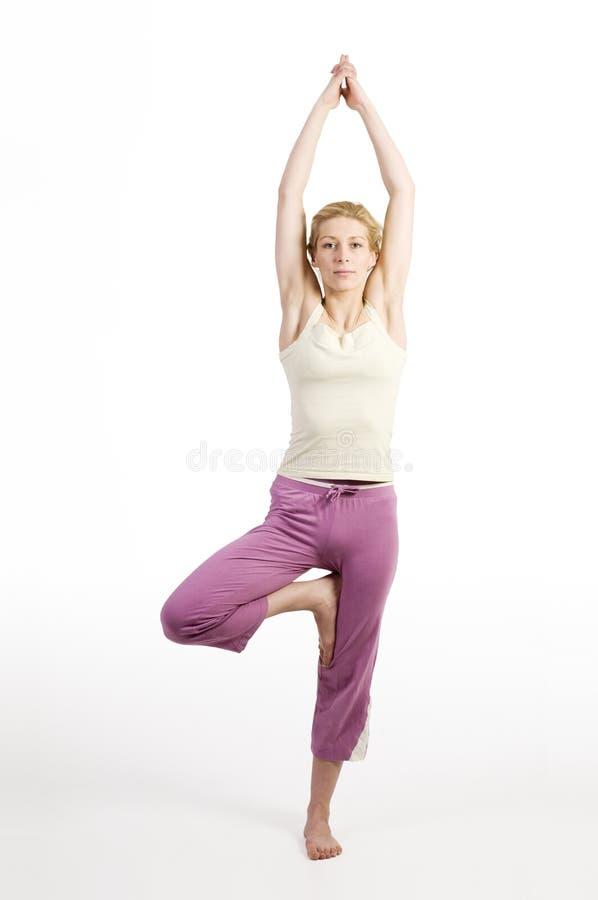 Fase três da árvore da ioga imagens de stock