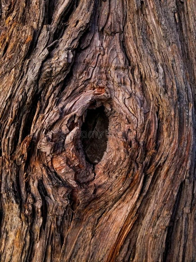 Fasern und Knoten eines Baumes lizenzfreie stockbilder