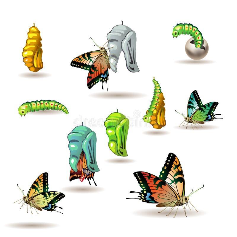 Fases da borboleta ilustração do vetor
