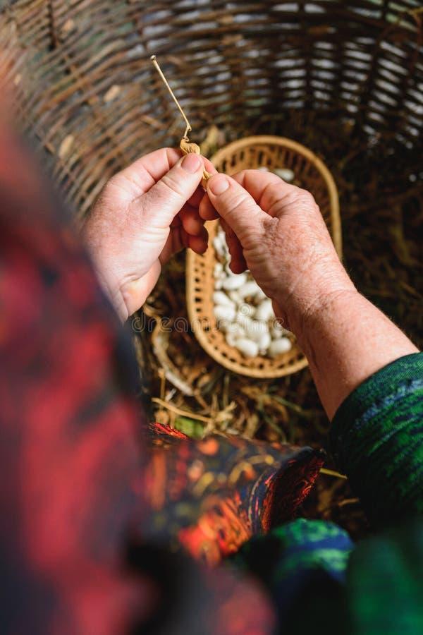 Fases da colheita do feij?o branco: colheita fechada seca com os feij?es secos prontos da mesma planta imagens de stock