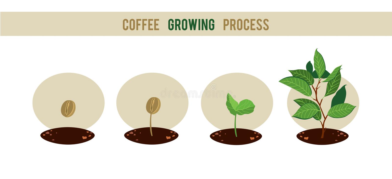 Fases da germinação da semente da planta ilustração royalty free