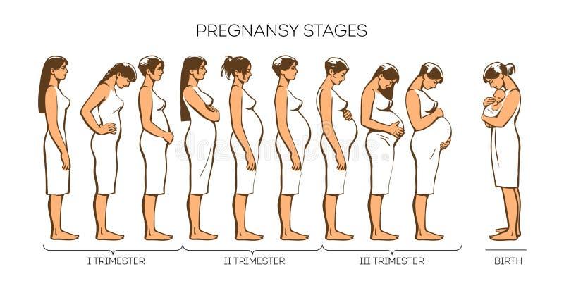 Fases da gravidez das mulheres ilustração do vetor