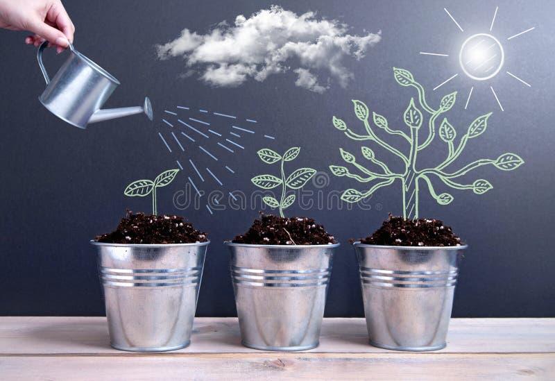 Fases De Crecimiento Del árbol Foto de archivo - Imagen de gráfico ...