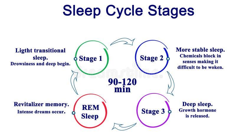 Fases do ciclo do sono ilustração do vetor
