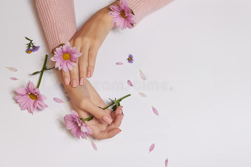 Fashion art skin care of hands and pink flowers in hands of women.  royalty free stock photos