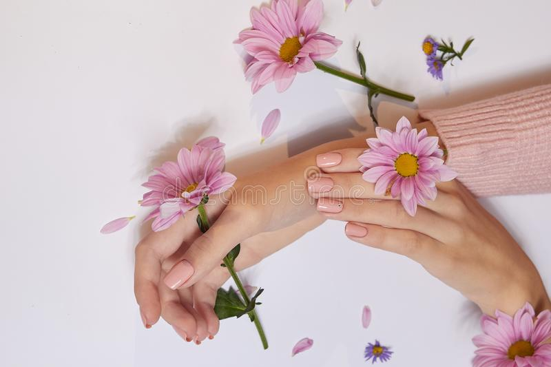 Fashion art skin care of hands and pink flowers in hands of women.  royalty free stock photography