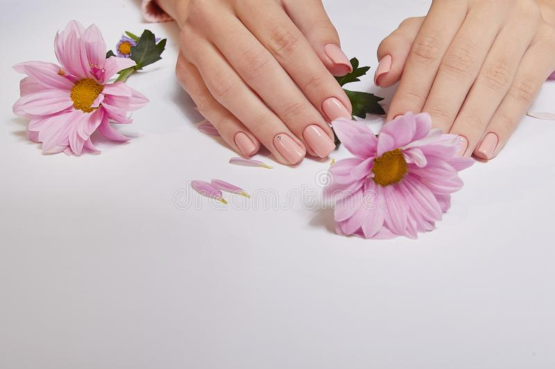Fashion art skin care of hands and pink flowers in hands of women.  royalty free stock photo