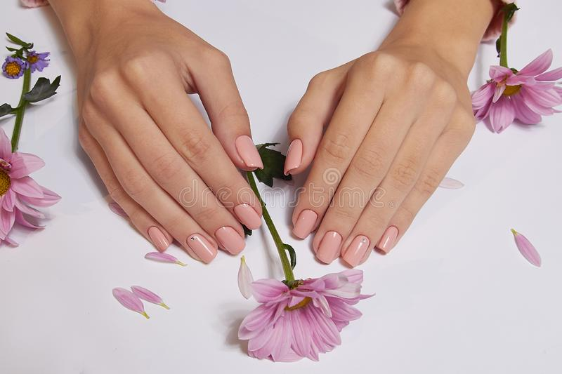 Fashion art skin care of hands and pink flowers in hands of women.  stock photography