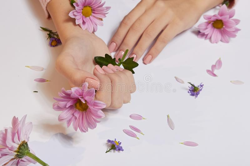 Fashion art skin care of hands and pink flowers in hands of women.  royalty free stock image