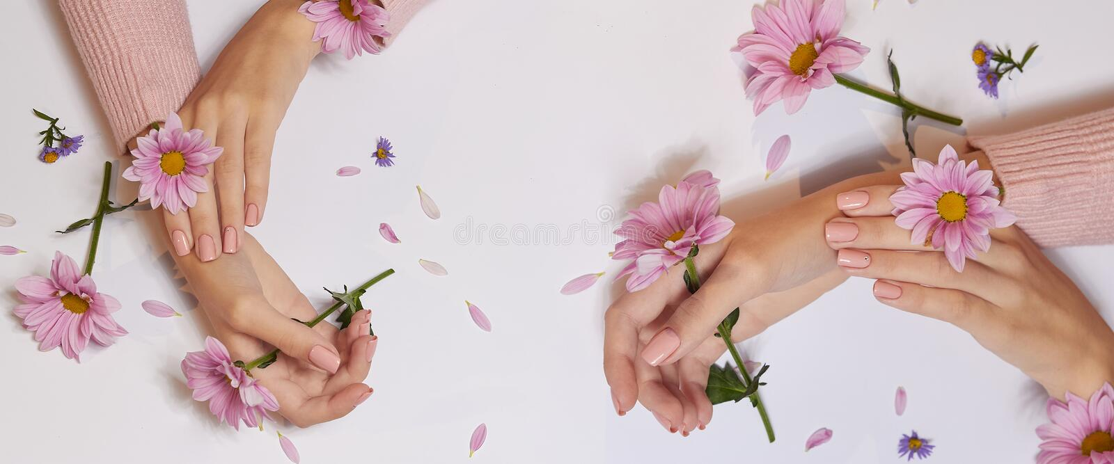 Fashion art skin care of hands and pink flowers in hands of women.  stock images