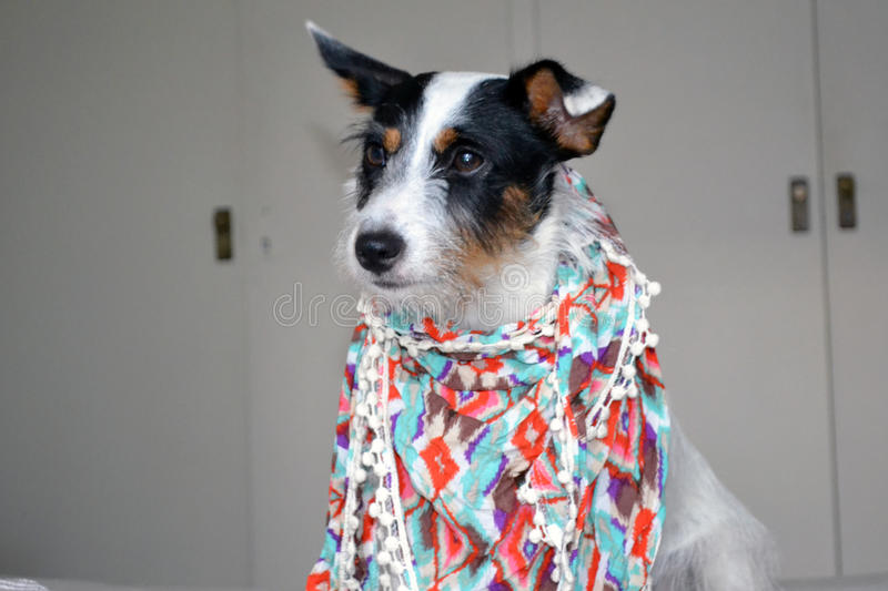 Fashion dog royalty free stock photos