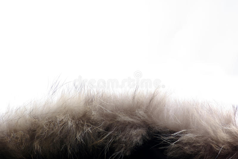 Download Fashion fashion stock image. Image of backdrop, nature - 23204815