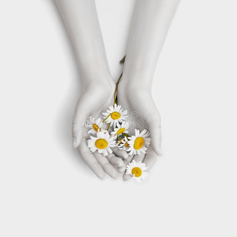 Fashion hand art chamomile natural cosmetics women, white beautiful chamomile flowers hand with bright contrast makeup, hand care. Creative beauty photo girl stock photo