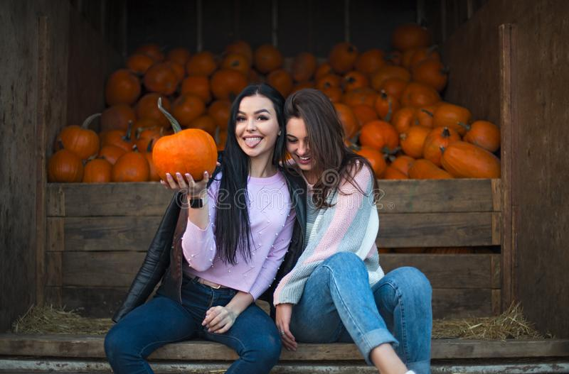Fashionable beautiful young girlfriends together at the autumn pumpkin patch background. Having fun and posing stock image