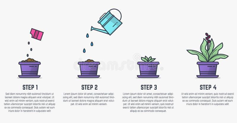 Fasi crescenti della pianta illustrazione di stock