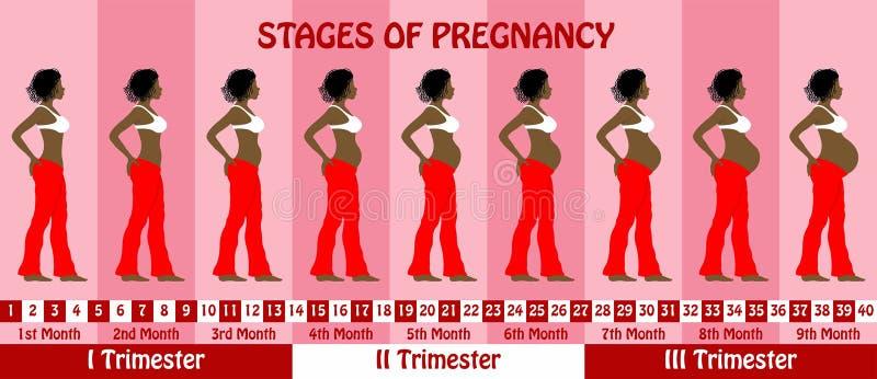 Fasi della gravidanza con una donna di colore incinta dei capelli dei dreadlocks illustrazione di stock