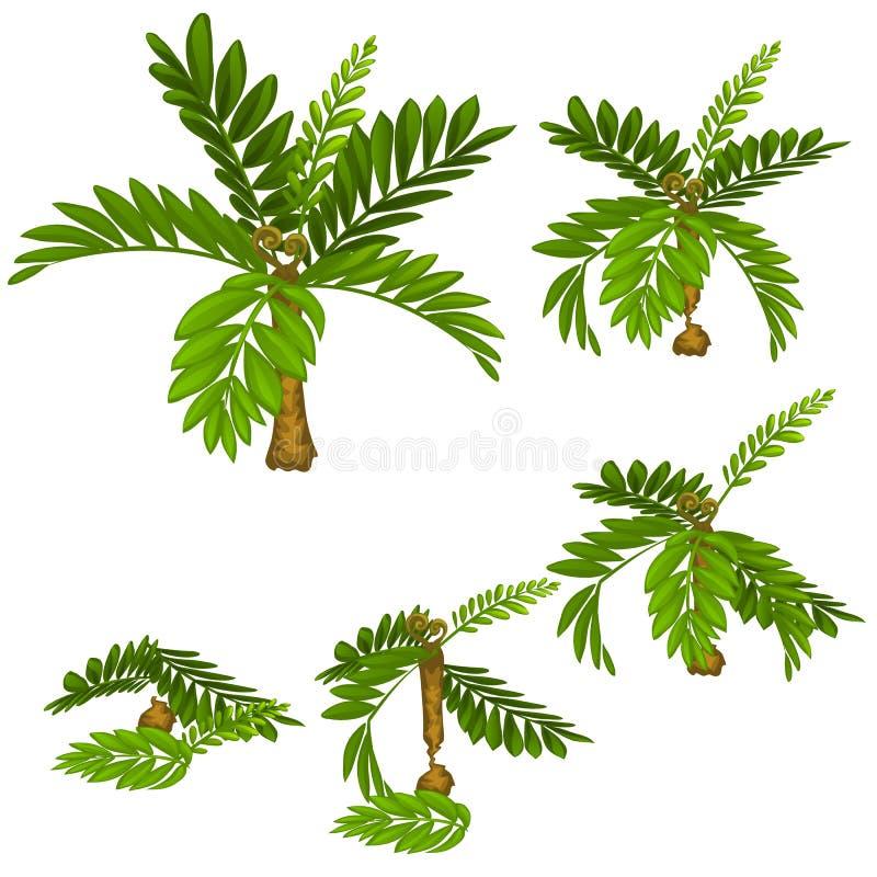 Fasi delle piante tropicali di danno isolate su fondo bianco disboscamento Illustrazione del primo piano del fumetto di vettore illustrazione vettoriale