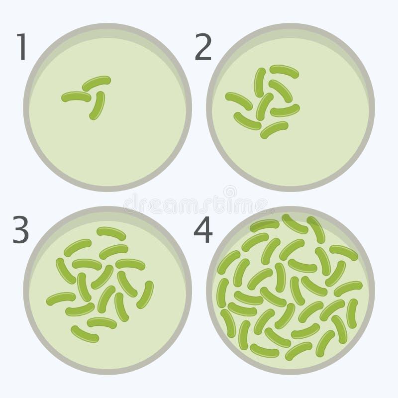 Fasi di crescita dei batteri batterio nelle capsule di Petri illustrazione di stock