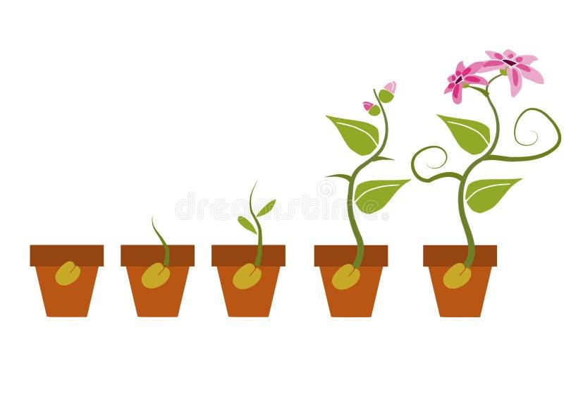 Fasi di crescita di una pianta illustrazione di stock